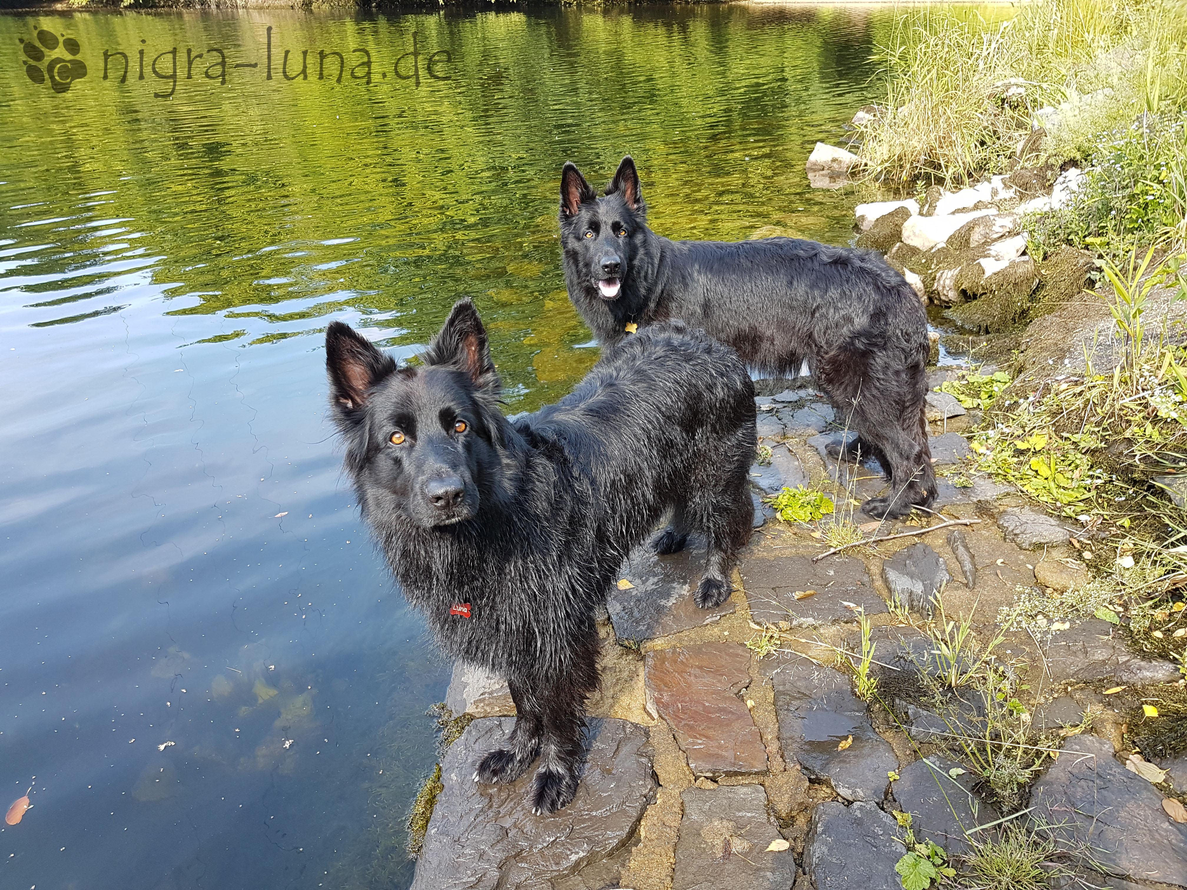 Luna und Arya Rente